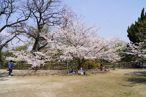 福山城の桜(お花見スポット) 画像6