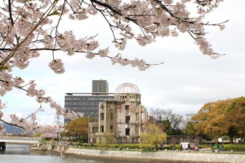 広島平和公園の 桜、元安川・本川を彩る