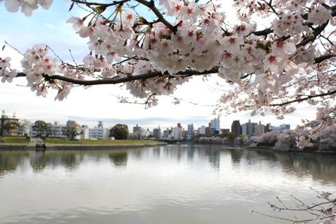 広島市内の川沿いの桜 散歩道 画像6
