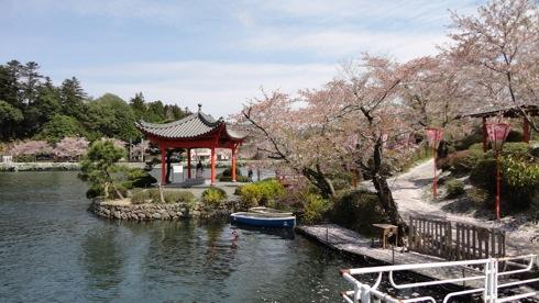 庄原市 上野公園の桜 画像9