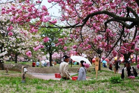 広島 造幣局の桜の通り抜け(花のまわりみち)2012 画像10