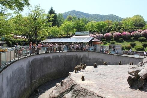 安佐動物園 猿山前