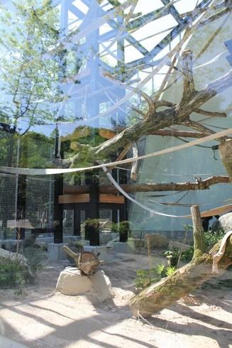 広島市安佐動物園 チンパンジー舎画像2