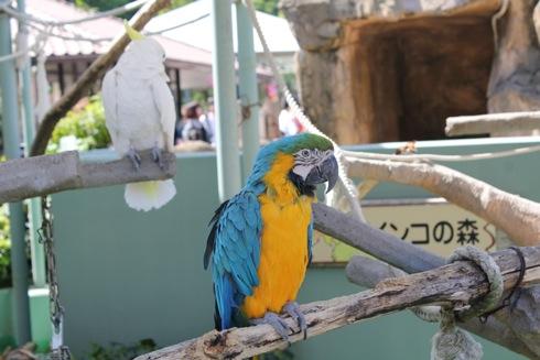 広島市安佐動物園 画像17