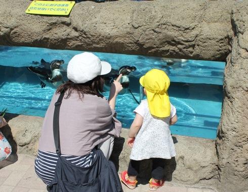 広島市安佐動物園 ペンギン水槽
