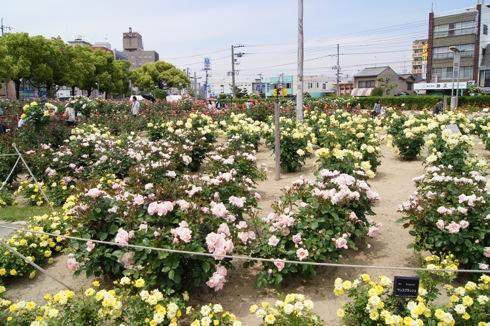 福山市 ばら公園の画像 28