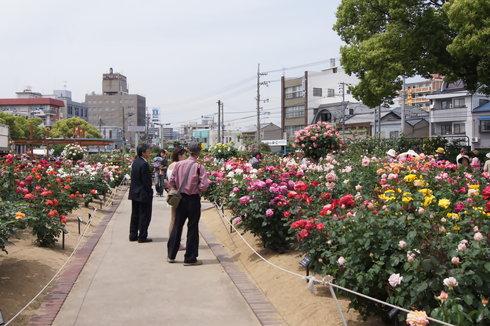 福山市 ばら公園の画像 6