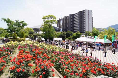 福山ばら祭2012 緑町公園の様子11