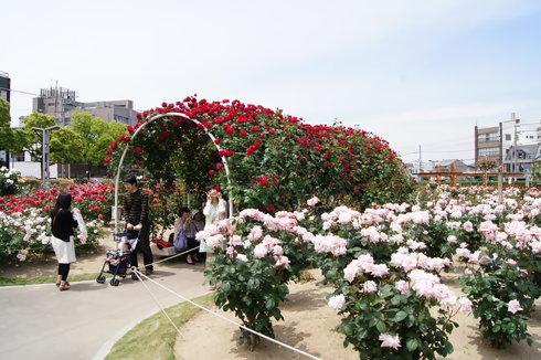 福山ばら祭2012 ばら公園の様子25