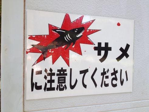 サメにご注意