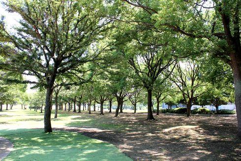マリンふれあいの里 大浦崎公園 キャンプやバーベキューも