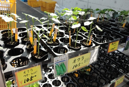 野菜の苗 画像