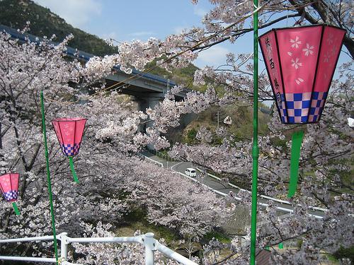 広島の桜 お花見 裏スポット!廿日市市大野の大田神社の桜が凄い