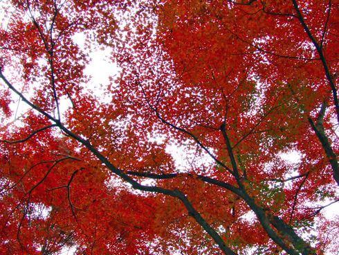 三次市 尾関山公園 の紅葉写真 11