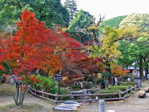 三次市 尾関山公園 紅葉するもみじが池に