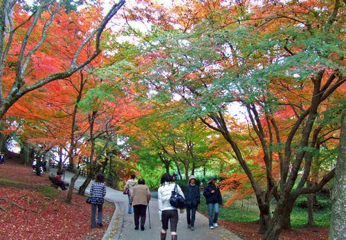 尾関山公園 紅葉は ライトアップも