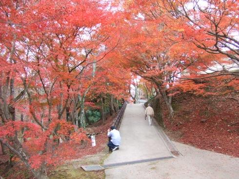 三次市 尾関山公園 の紅葉6