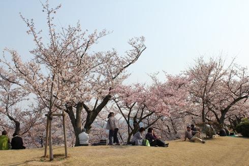 千光寺公園にマイ桜を持とう!恋人の聖地にちなみ
