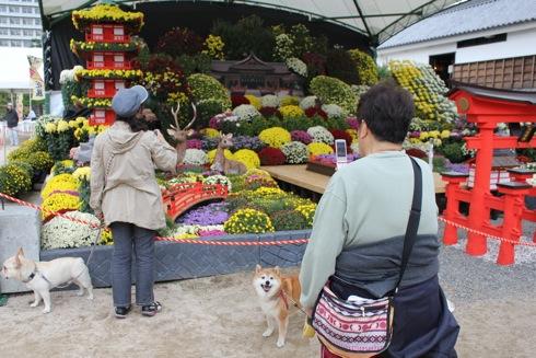 広島城 大菊花展 と犬を撮影する人
