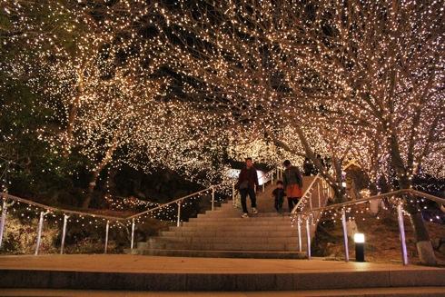 備北丘陵公園 イルミネーション2012 光ル森の画像2