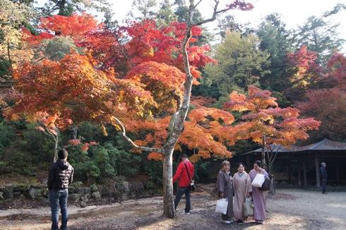 2012 紅葉谷公園のもみじ 画像