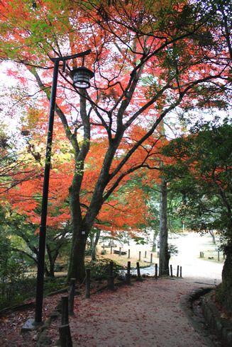 2012 宮島 もみじ道の様子 画像25