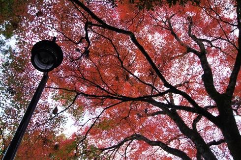 2012 宮島 もみじ道の様子 画像28