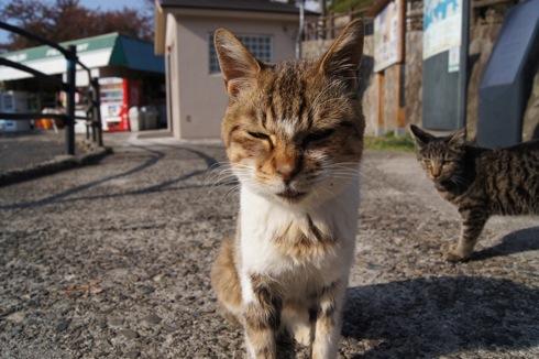 広島 黄金山のネコたち1