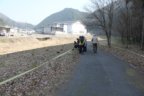 フクジュソウが咲いている小道