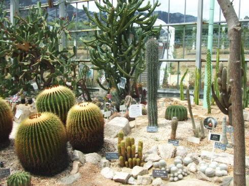広島市植物公園 いろいろな温室2