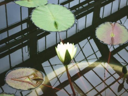 広島市植物公園 大温室の中の様子4