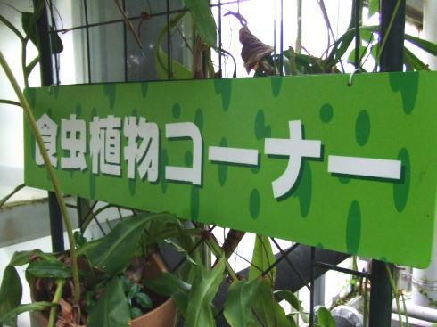 広島市植物公園 食虫植物