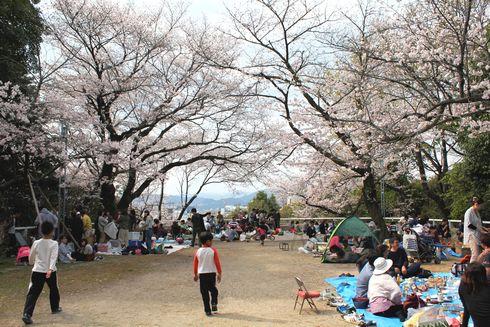比治山公園の桜 画像3
