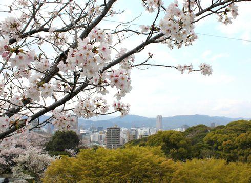 比治山公園 桜のアップ画像