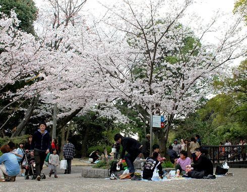 比治山公園の桜、現代美術館の周辺