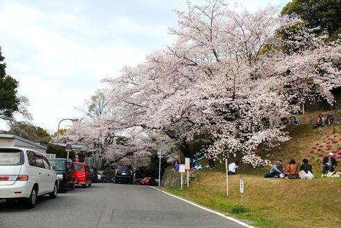 比治山公園の桜 画像5