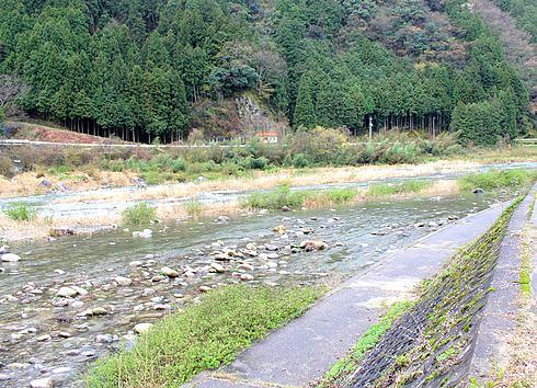 附地の川土手(安芸太田の桜) 画像6