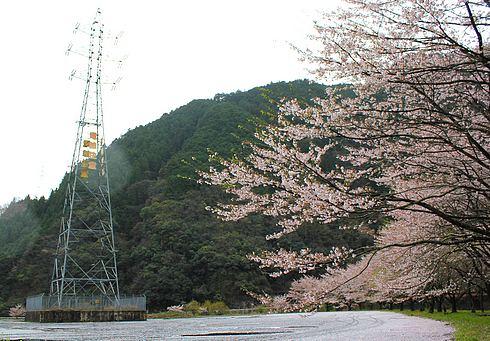 附地の川土手(安芸太田の桜) 画像1