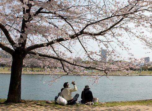 広島市 川沿いの桜 画像5