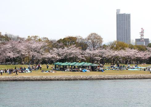 中央公園近くの川沿いの写真
