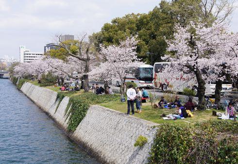 広島市 平和公園近くの桜