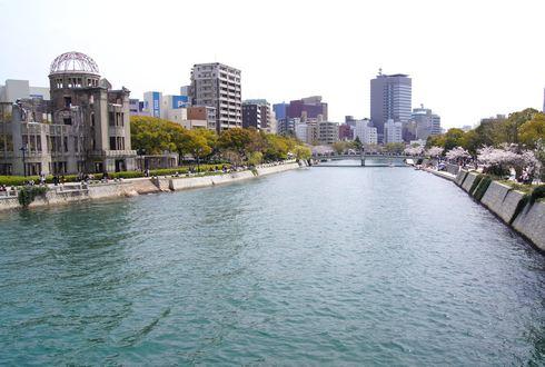 広島市 平和公園の桜 1