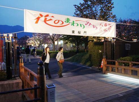 広島 造幣局桜の通り抜けライトアップ11