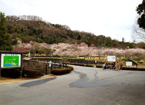 鏡山公園の桜の頃の写真1