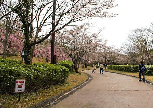 鏡山公園 桜の園 散歩道の画像