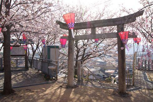 廿日市市 大田神社の桜の写真5