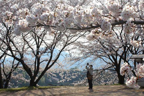 廿日市市 大田神社 近くの桜の広場2