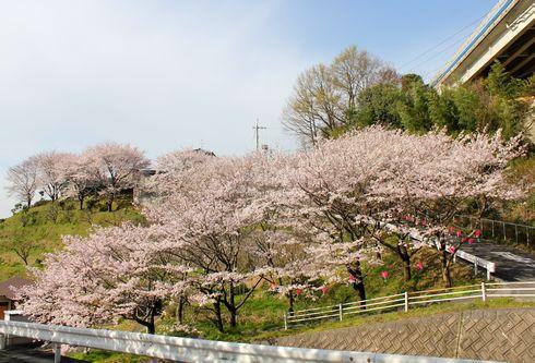 宮島と廿日市の町並みを見下ろす桜の花園、大田神社