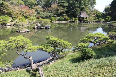 縮景園 池の脇にある松の木の写真