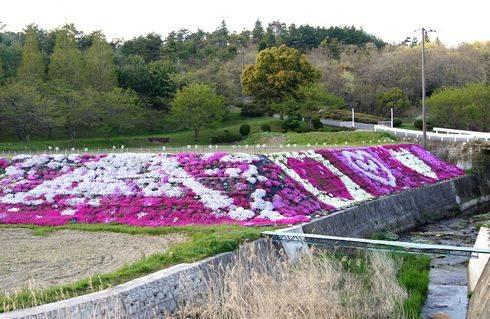 郷原カントリークラブ 入口に咲く芝桜